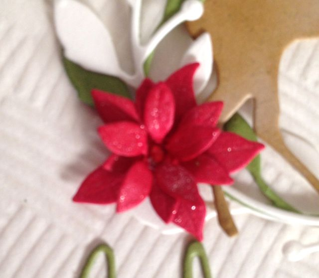 Merry Christmas-Poinsettia Closeup