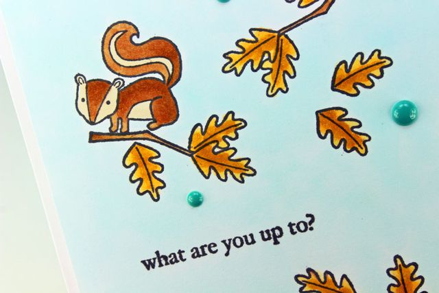 Squirrel-Tree-CU